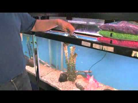 How To Change Fish Tank Rocks
