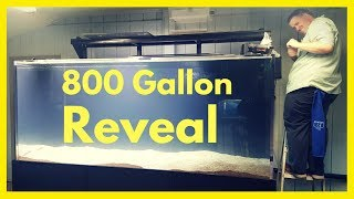 Corys 800 Gallon Reveal   Plus a look around the Fish Room   More Baby Turtles thumbnail