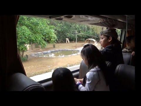 Tempat Wisata Alam Untuk Anak Taman Safari Indonesia Cisarua
