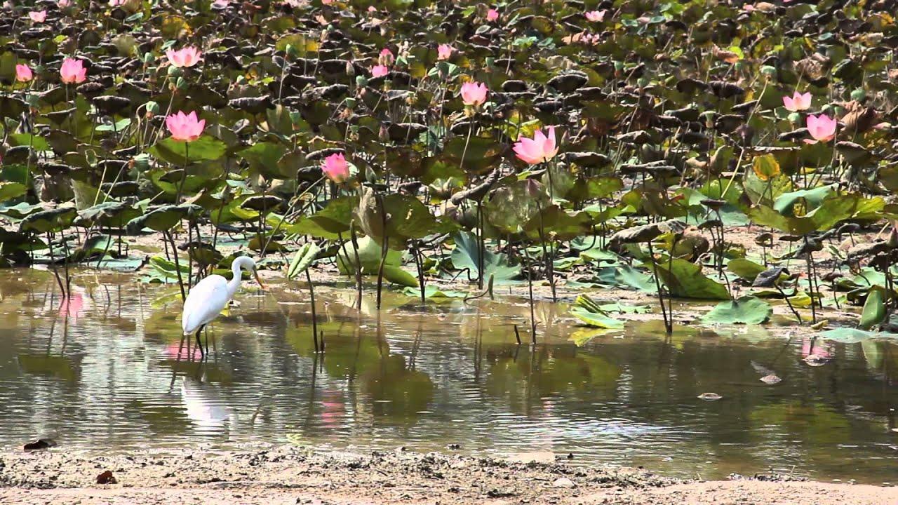 Cutaways- Heron @ Japanese Gardens, Singapore - YouTube