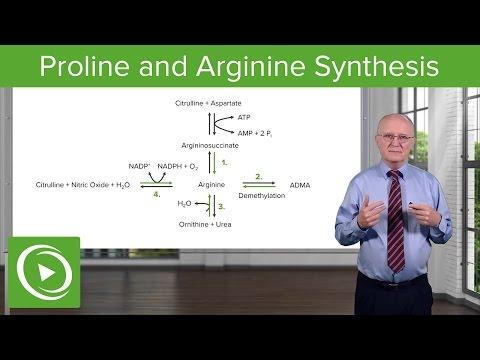 Proline and Arginine Synthesis – Biochemistry   Medical Video