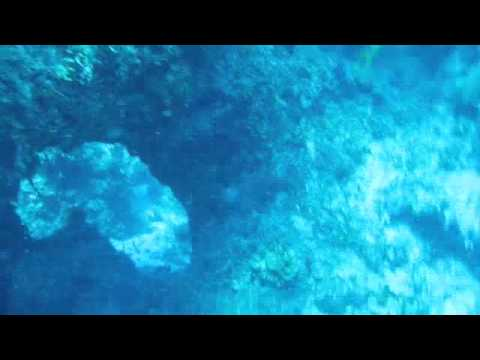 Andros Bahamas Diving-Leopold Reef