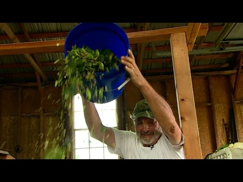 Farmers create cash crop with craft beers and hops