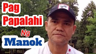 CROSSBREEDING VS INBREEDING (GAMEFOWL) || PWEDE BA ILABAN ANG INBRED NA MANOK (Chicken Tour)