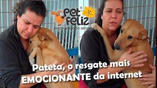 Cão Pateta, nas ruas com pavor, uma liçao de amor de cão