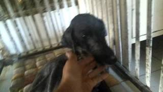 An abused Dog Petted For The First Time