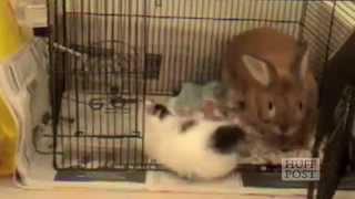 Compilatie faze tari cu pisici ce se joaca cu iepurasi