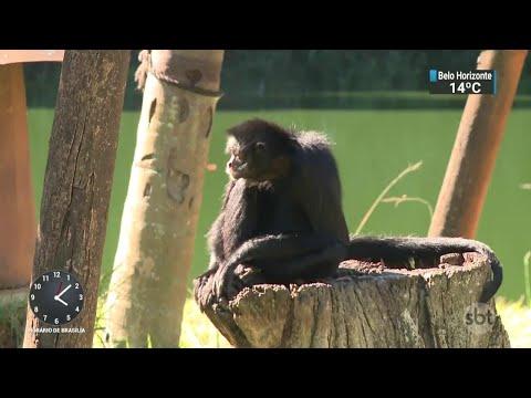 Denúncia: Zoológico afogava animais de propósito no interior de SP | SBT Notícias (23/05/18)