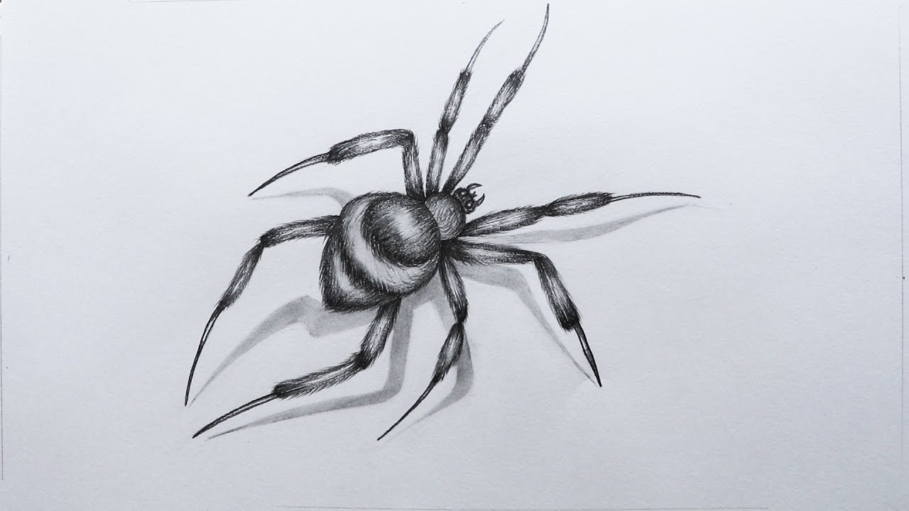 how to sketch a spider youtube