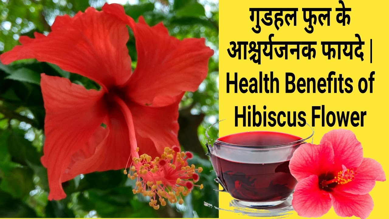 Health Benefits Of Hibiscus Flower In Hindi Youtube