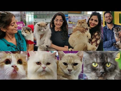 Biggest Cat Show in India