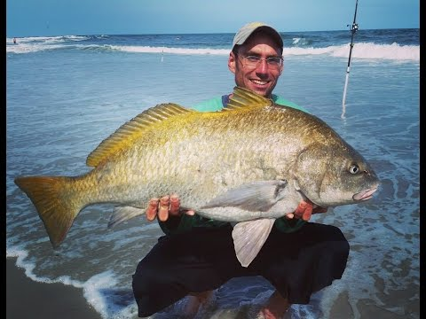 Surf and Jetty Fishing for Black Drum in NJ
