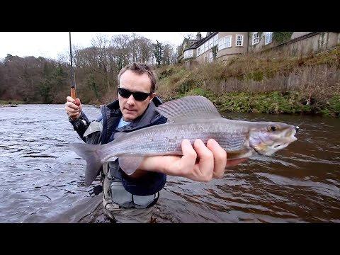 How To Fly Fish Using Light Gear. Nymph Fishing For Grayling & Buzzers For Rainbow Trout.