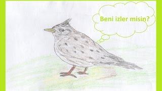 Almanca çocuk şarkısı: Kuşların Düğünü / Ein Vogel wollte Hochzeit machen