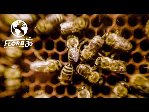Medicine From Bees: Royal Jelly, Propolis, Pollen And Manuka Honey