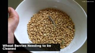 How To Clean And Cook Whole Wheat Berries