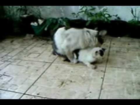 Ciri Ciri Kucing Sayang Kepada Majikannya Funnycat Tv