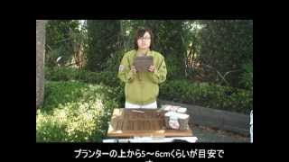 花の大和商品の「チューリップ栽培セット」での栽培方法を、動画にてご...