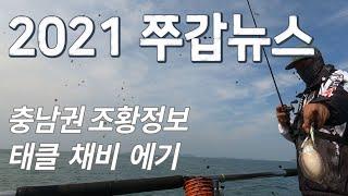 2021 쭈갑 뉴스  주꾸미 낚시 갑오징어 낚시 충남 …