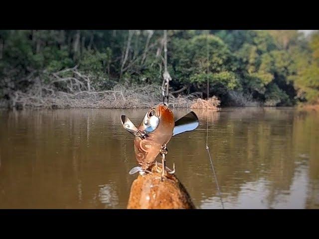 NUNCA JULGUE UMA ISCA ESQUSITA ANTES DE USAR. Pescaria!