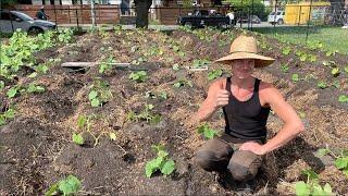 Transforming Your Lawn Into A Garden