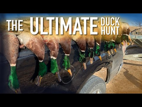 This is the Duck Hunt We all Dream Of! – (Mallard and Pintail Limits)
