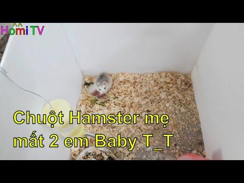 Chuột Hamster robo bị mất 2 bé baby  ❤ Homi ToysReview TV ❤