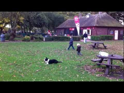 K9 Click tricks Dog obedience Wait command with distance