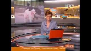 В Петербурге тестировали собак - терапевтов