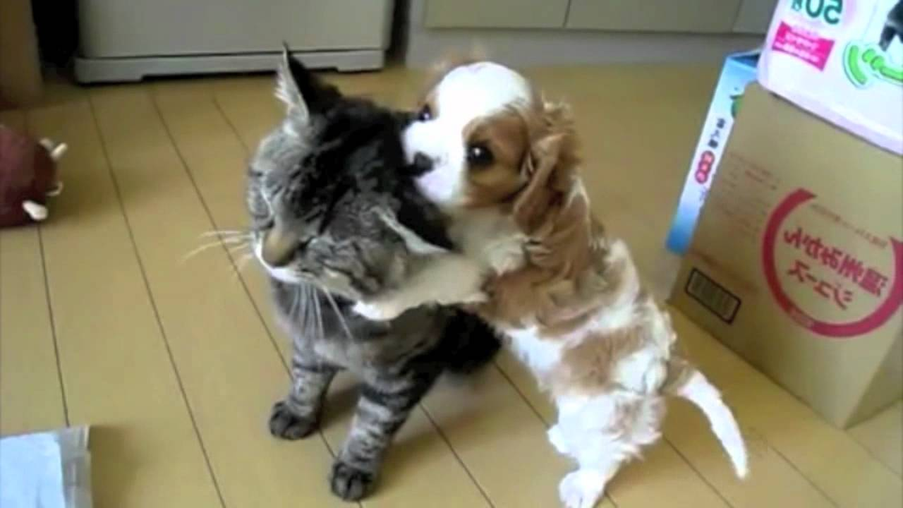 cute puppy plays with cat