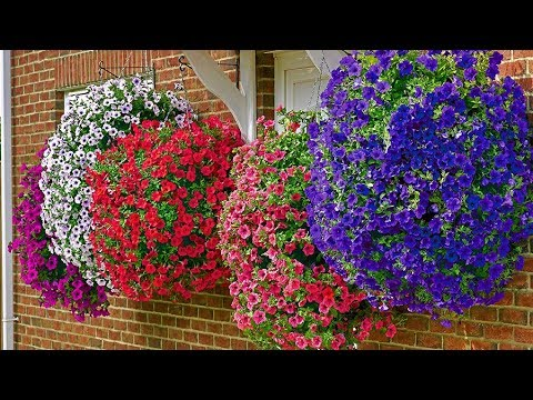 How To Plant Surfinia Hanging Basket Guide Youtube