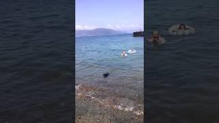 犬と一緒に海水浴.
