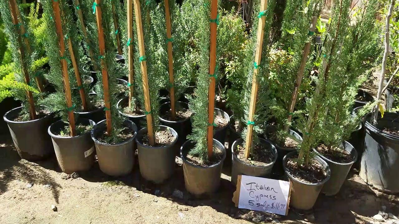 Halls Plant Nursery Temecula Ca