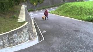 この子の写真はこちらから! http://www.masaki-collection.jp/puppy/in...