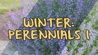 Winter: Perennials I