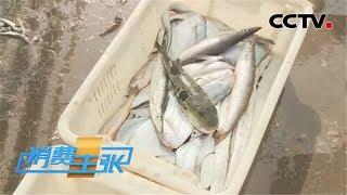 《消费主张》 20200424 应季美食之旅:海鱼诱惑| CCTV财经