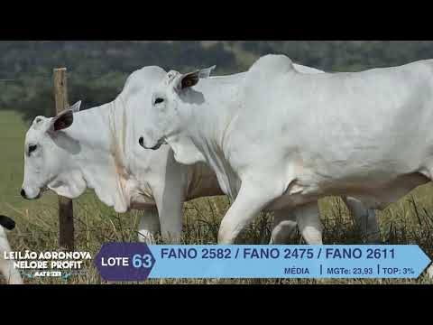 LOTE 63 FANO 2582 X 2475 X 2611