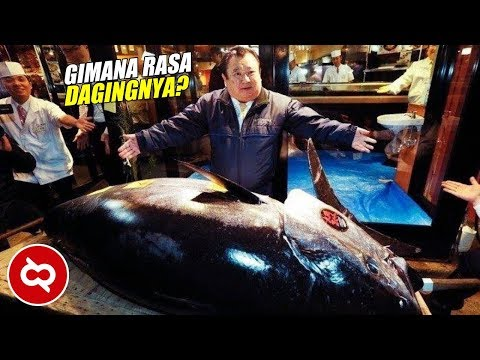 Hanya Untuk Dijadikan Sushi , Harganya Capai 44 Miliar Rupiah! 10 Ikan Termahal Di Dunia