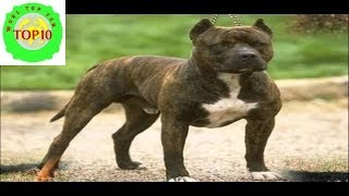 World Top 10 Most Dangerous Dog Breeds