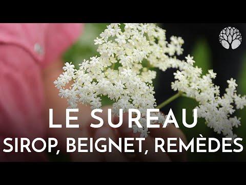 Le Sureau Noir, Sirop, Beignet, Toux
