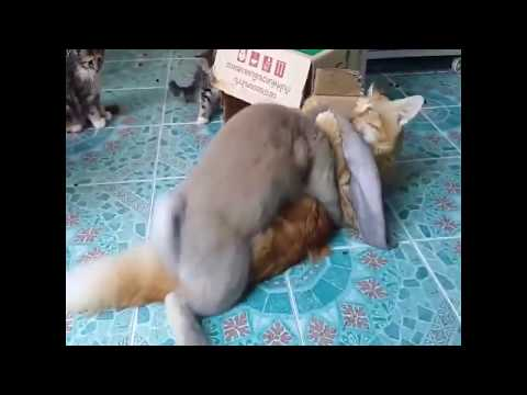 Funny Rabbit In Love With Cat :)
