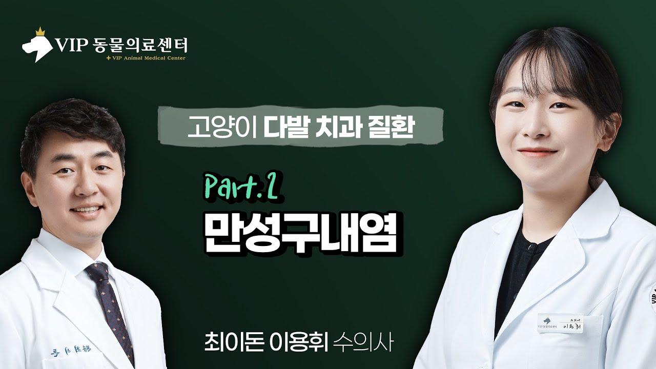 [치과] 고양이 다발 치과 질환 2부(만성구내염)