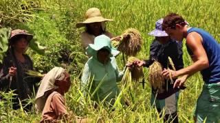 Worlds Most Beautiful Rice Terraces - Batad, Banaue (Becomin...