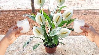 Faça sua Planta Florir com 1 copinho desse Poderoso Adubo