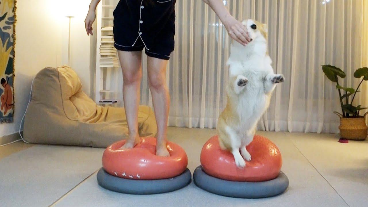 강아지가 운동하는데 주인이 더 신나면 생기는 일ㅋㅋ