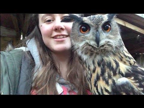 All About Koby - European Eagle Owl (bubo bubo) | Apollo Falconry