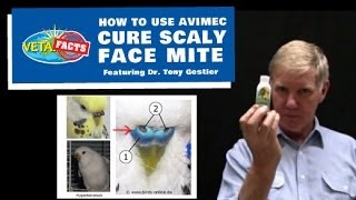 Cure Scaly Face Mite -- How to use Avimec