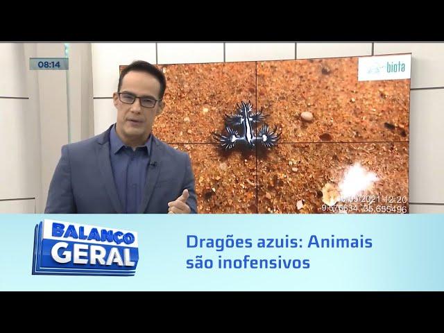 Dragões azuis: Animais são inofensivos, segundo professor da Ufal