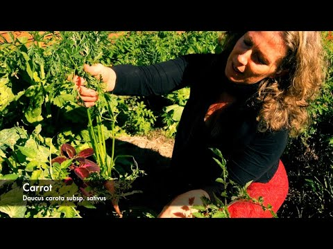My Permaculture Garden - Morag Gamble.  http://ourpermaculturelife.com/