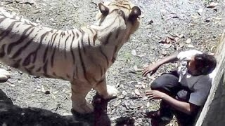 white tiger attack student was killed by tiger in delhi zoo india